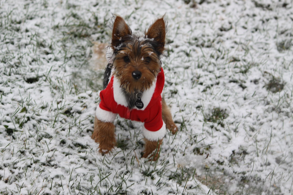 Ways to Keep Your Pets Safe During the Cold Winter Weather
