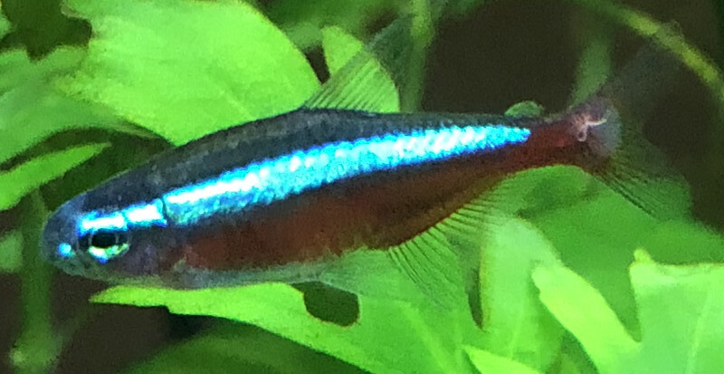 Unknown External parasite (with pictures) - The Planted Tank