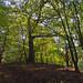 Shipwright's Wood, Thundersley, Essex