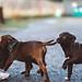 puppies_3795