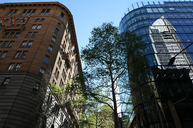Sydney CBD Tree between Buildings - Panasonic LX 10