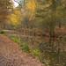 Leafy tow path