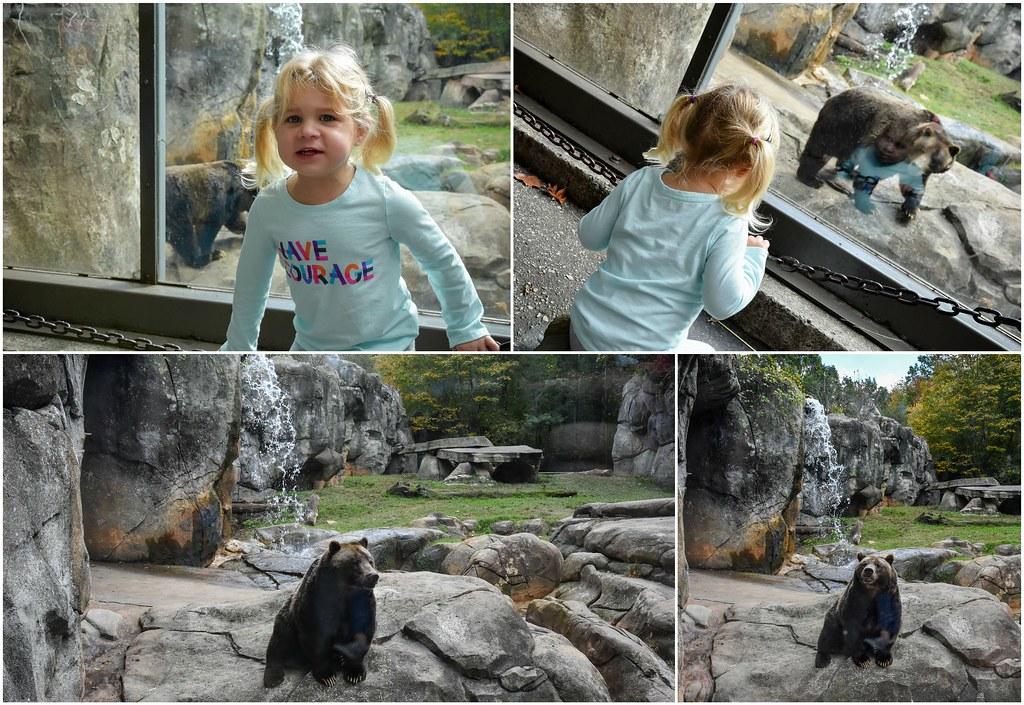 hannah and the bear