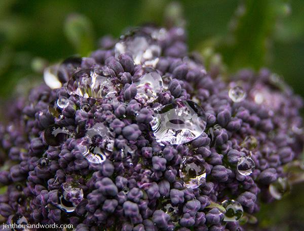 Drops on broccoli 2