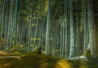 Sagano Bamboo Forest at Arashimaya