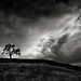 Tree with Nearing Strom by StefanB