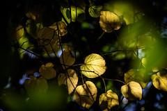 Autumn Intimity