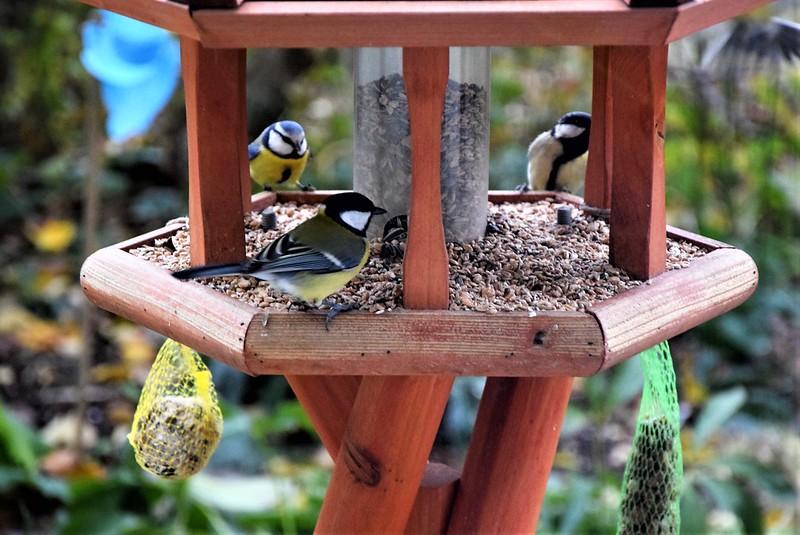 Birdhouse 26.11 (4)
