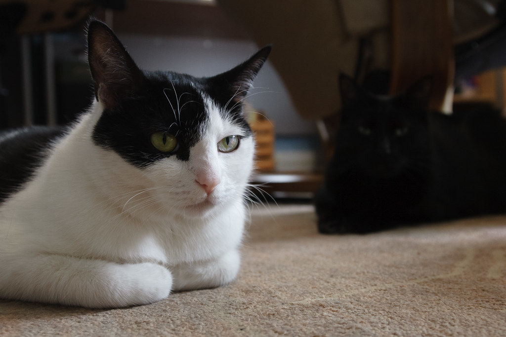 Our cats Scout and Emma resting on the floor of my office