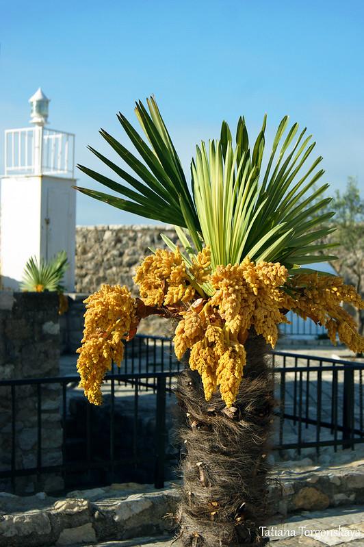Цветущая пальма