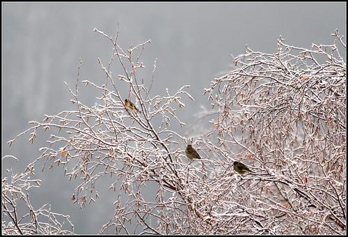 """Concours  """"L'hiver des fous jardiniers""""-Participations 38214539144_0995b7d766"""