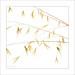 2017-10-07 08-33-43 (B,Radius8,Smoothing4)-5 by William Neill