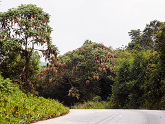 Nyungwe National Forest