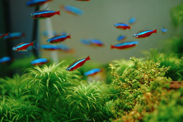 #GoGreen #SwimGreen Fish swims swims swims