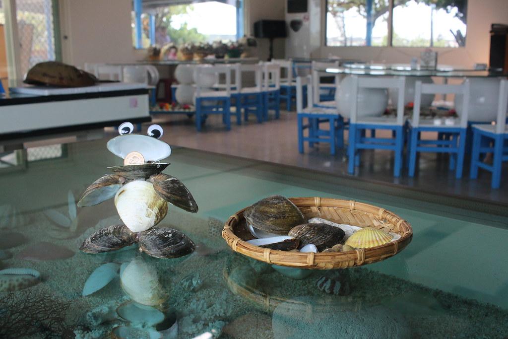 口湖馬蹄蛤 (13)