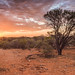 Meekatharra North/ Western Australia by Kevin Scattini