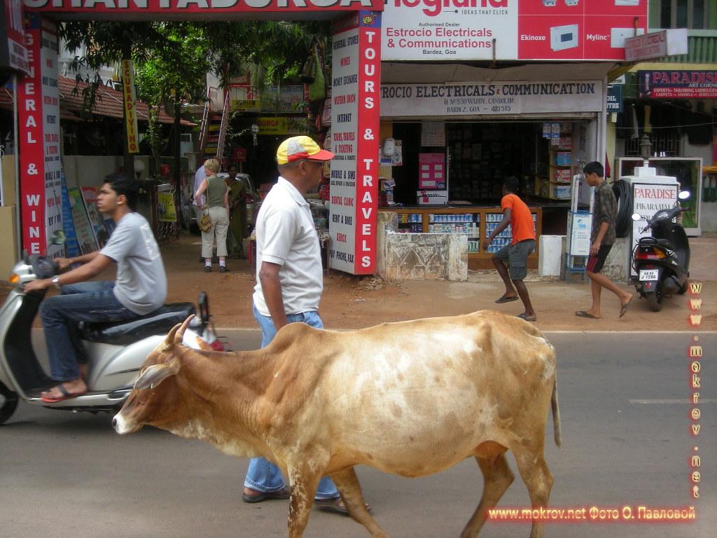 Индия штат Гоа, деревня Кондолим прогулки туристов с Фотоаппаратом