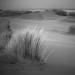 Dunes III - Terschelling Island by Hengki Koentjoro