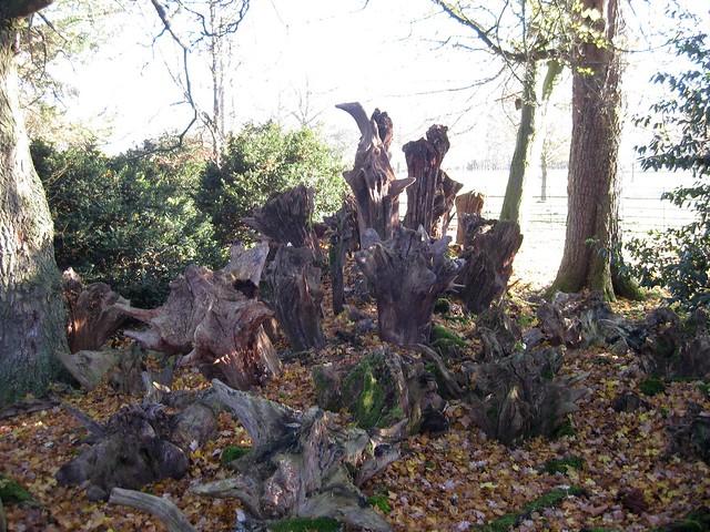 Wimpole Hall stumpery
