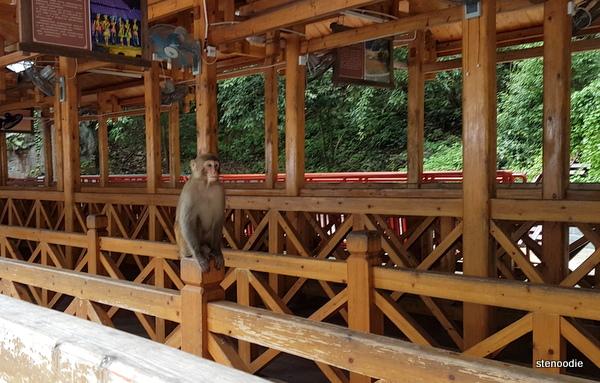 monkey on the rail