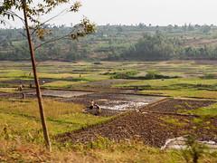 2017 Ruanda, Butare to Nyungwe Forest