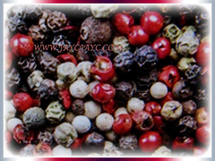 Colourful fruits of Piper nigrum (Black Pepper, Common Pepper, Pepper Vine/Plant, White/Madagascar Pepper, Lada Hitam in Malay), 14 Nov 2017