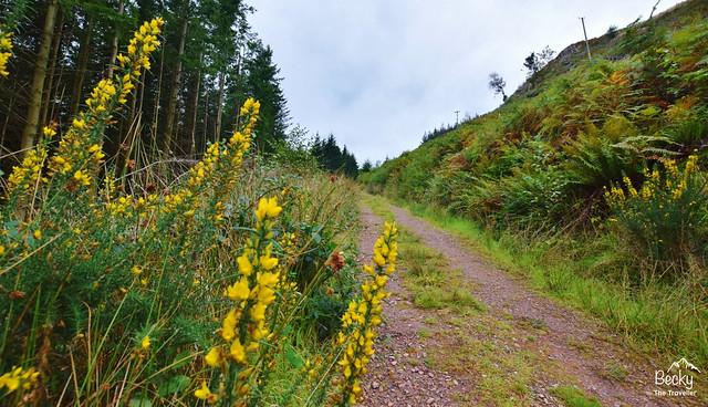 Eskdale walk to Ravenglass - gravel track