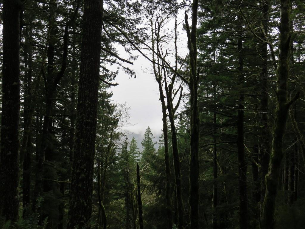 View from the Cummins Ridge Trail