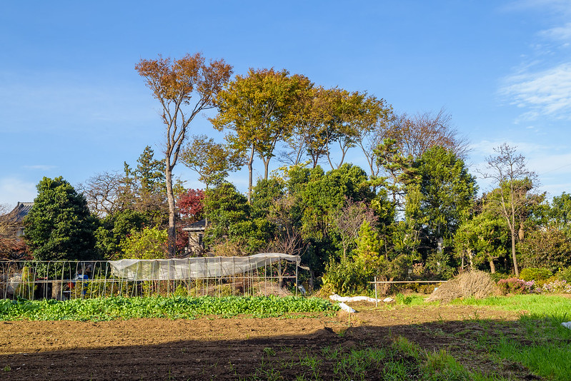 Farmer in Musashino