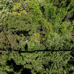 Canopy Transect