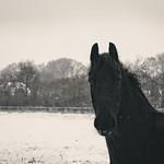 2015-01-24 um 15-11-15 - Pferd im Winter