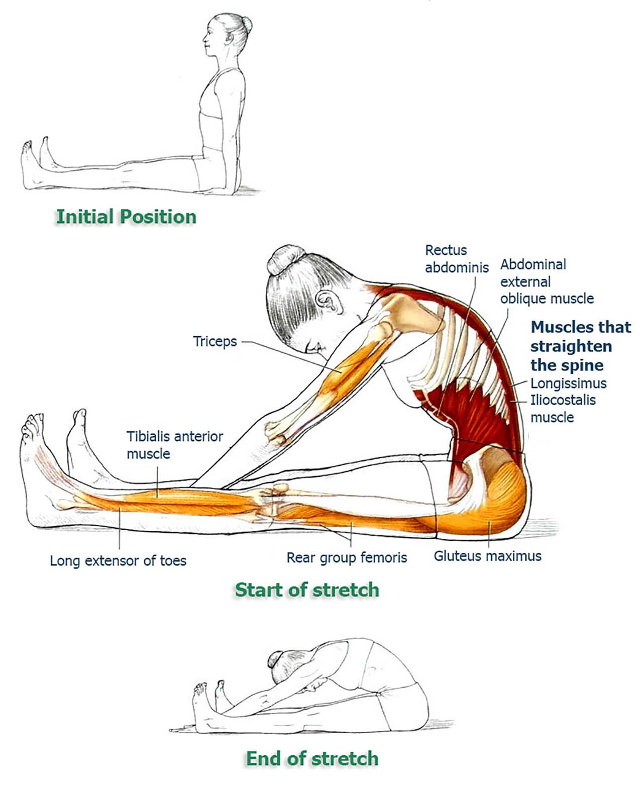 8 Exercises To Improve Your Posture And Relieve Your Back & Spine - Back Stretching: Seated toe touch is the most common back stretching method. It is easy to improve and as you improve, you can lower your upper body more towards your toes. Once you get used to touching your toes, you can try reaching out beyond your feet and stretch more.