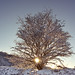 Snowy tree at sunrise by Chris Beesley