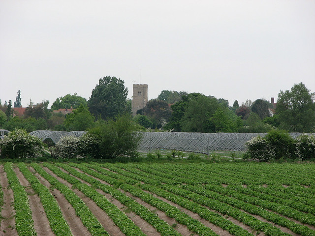 Farmland near Goldhanger