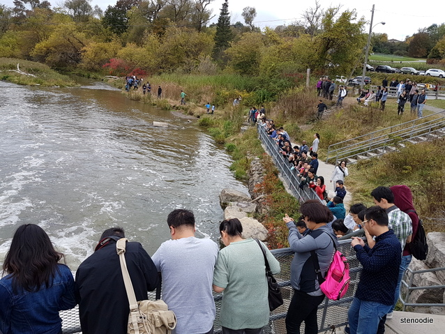 Port Hope Ganarsaka Fish Ladder popular