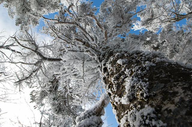20160109-黒斑山-0206.jpg