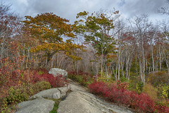 Long Lake Provincial Park - Lakeview Trail