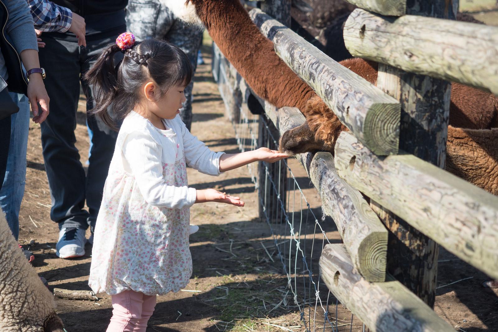 Mother_Farm_chiba-59