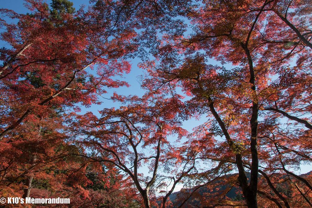 IMG_2129東郷公園