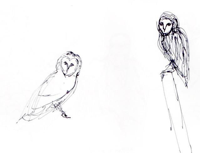 171202_Barn owls 2