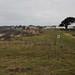 SCP: Naish Farm, Barton on Sea