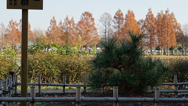 DSC05874水元公園