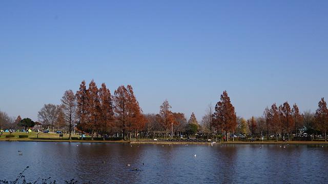 DSC05865水元公園