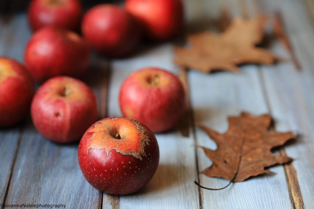 Autumn Days 1