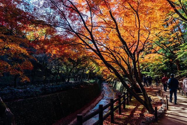 Kyoto_Kitano_07_28mm