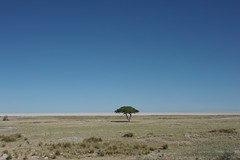 In the middle of nowhere Etosha park.