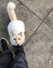 Stray Cat - Culver City, California