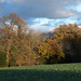 Riddlesdown to Coulsdon | Autumn walk-46