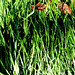 Grass & Leaves