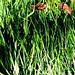 Grass & Leaves
